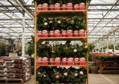 Snacker Tomato Rack Van Wingerden Greenhouses 04