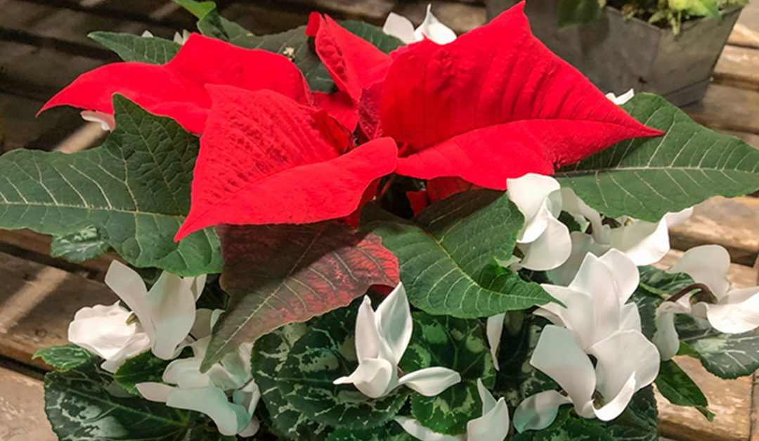 Van Wingerden Young Plants – Customer Appreciation Day