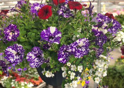 12inch-Hanging-Basket-(1024)